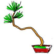 盆栽 樹形 文人木