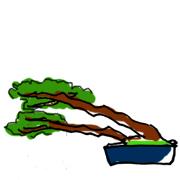盆栽 樹形 吹き流し