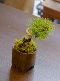 盆栽 モットー