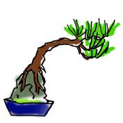 盆栽 樹形 石付き
