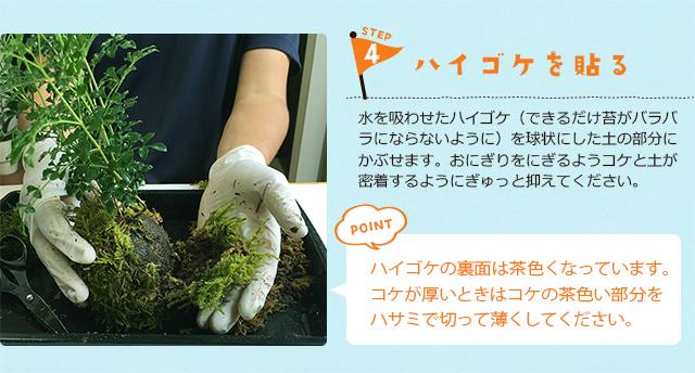 苔玉の作り方4