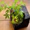 盆栽・野草寄せ植え教室