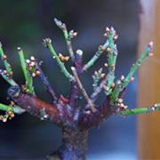 梅の移り変わり