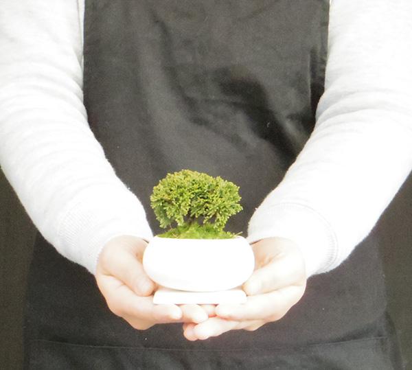 連山ヒノキの盆栽