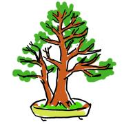盆栽 樹形 双幹