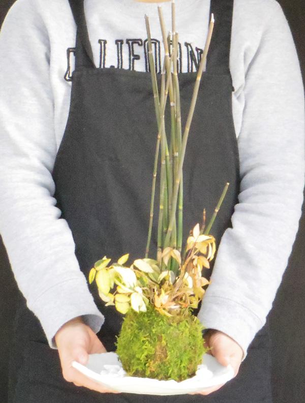 トクサテイカカズラの苔玉