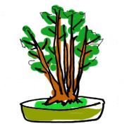 盆栽 樹形 株立ち