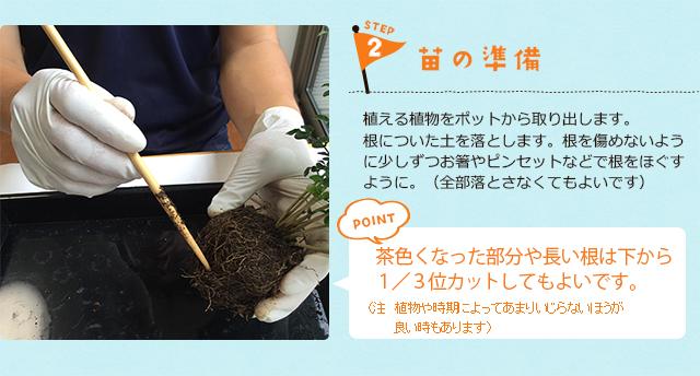 苔玉の作り方2