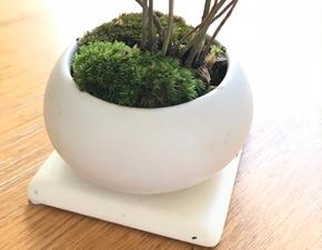 山モミジの盆栽