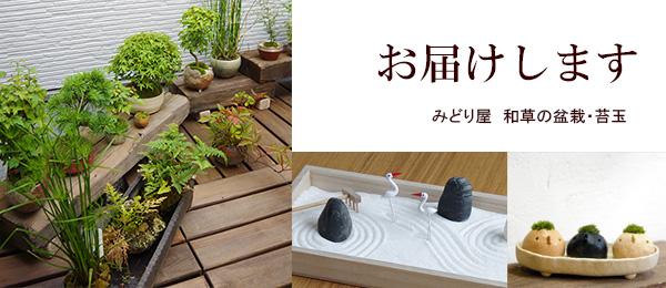 和草は苔玉・盆栽の専門店です