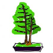 盆栽 樹形 双樹