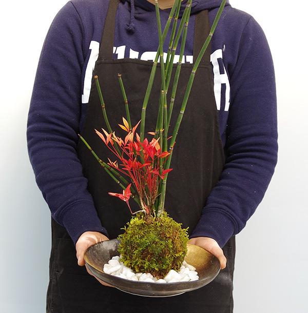 トクサ南天の苔玉